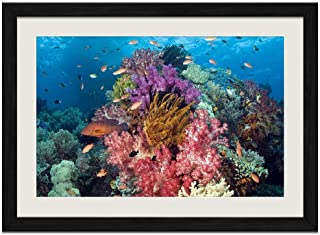 Undersea Plants - Art Print Wall Black Wood Grain Framed Picture(20x14inches)