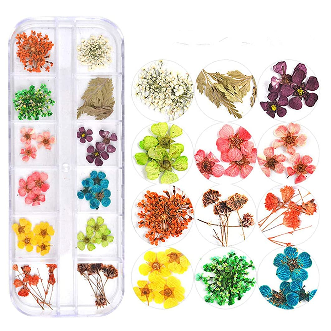 悲しいことに巧みなアジテーション押し花 ドライフラワー 3Dネイル レジンデコレーション DIYデコレーション飾り用品 (3)