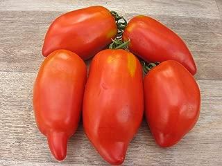 HOT - San Marzano Redorta Tomato 30+ Fresh Organic Seeds