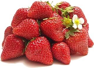 Best delizz strawberry plants Reviews