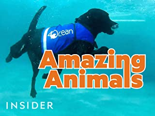 Best animal planet dogs Reviews