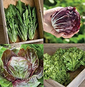 David's Garden Seeds Collection Set Chicory 9726 (Multi) 4 Varieties 475 Non-GMO, Open Pollinated Seeds