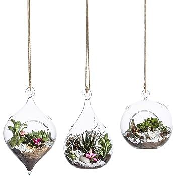 Whole Housewares Glass Hanging Terrarium Set of 3 in Large Size- Succulent/Moss/Air Plant Terrarium - 3 Pack in Different Shape