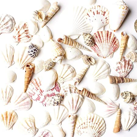Super Z Outlet Mixed Ocean Beach Fairy Garden Assorted Seashells Marine Life for Decorations, Arts & Crafts, Party Favors Collection (Approx. 50 Pieces)