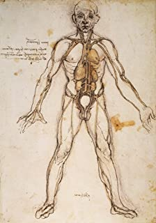 Leonardo Anatomy C1494 Ngeneral Scheme Of The System Of Vessels In The Human Body Pen And Ink Study C1494 By Leonardo Da Vinci Poster Print by (24 x 36)