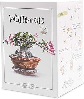 GROW2GO Cactus Starter Kit - Juego de plantación de mini-invernadero, semillas de cactus y tierra - idea de regalo sosteni...