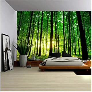 wall26 - Sun Shining Through a Tall Tree Forest - Wall Mural, Removable Sticker, Home Decor - 100x144 inches