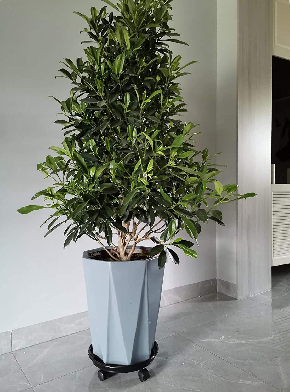 Amkoskr 2PCS 40cm Redondo Soporte para Macetas con Ruedas Universales Transportadores de Plantas Flores Pesadas para Jard/ín Hogar Interior Exterior Marr/ón