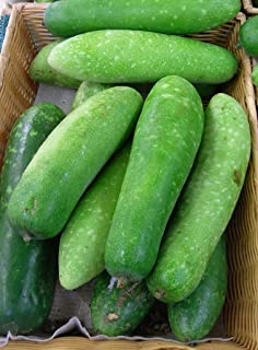 Heirloom Jointed Gourd-Hairy Melon Seeds(Mokwa Long) by Stonysoil Seed Company