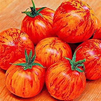 FastDirect Semillas de Tomates Gigantes Rojos 10 PCS Semillas de ...