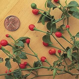 Burpee McMahon's Bird Pepper Hot Pepper Seeds 30 seeds