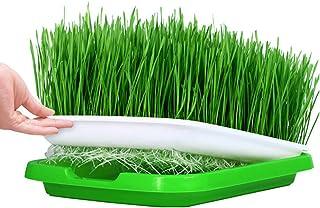 MOEGEN Bandejas de Semillas germinadas, 5 Piezas semilleros germinacion Hidropónica Bandeja de para la Oficina en casa jardín