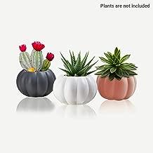 Charming Melodie-Cute Small Pumpkin Ceramic Succulent Pots Round Set of 3 Mini cactus Planters Indoor Plant Pot, flower planter pot/Containers,Succulent planters with Drainage2.5x3.3 Inch