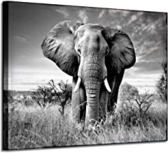 Elephant Picture Canvas Wall Art: African Wild Animals Artwork Painting Print for Living..