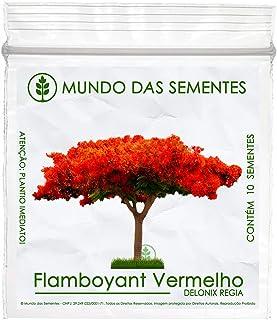 10 Sementes de Flamboyant Vermelho - Delonix regia