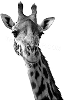 Wee Blue Coo Photo Black White Giraffe Portrait Face Wall Art Print