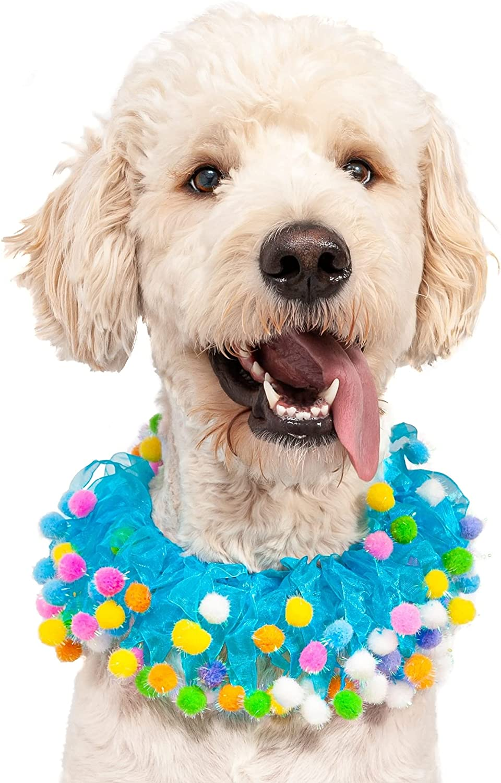 Sale Special Financial sales sale Price Midlee Blue Birthday Pom Dog Collar