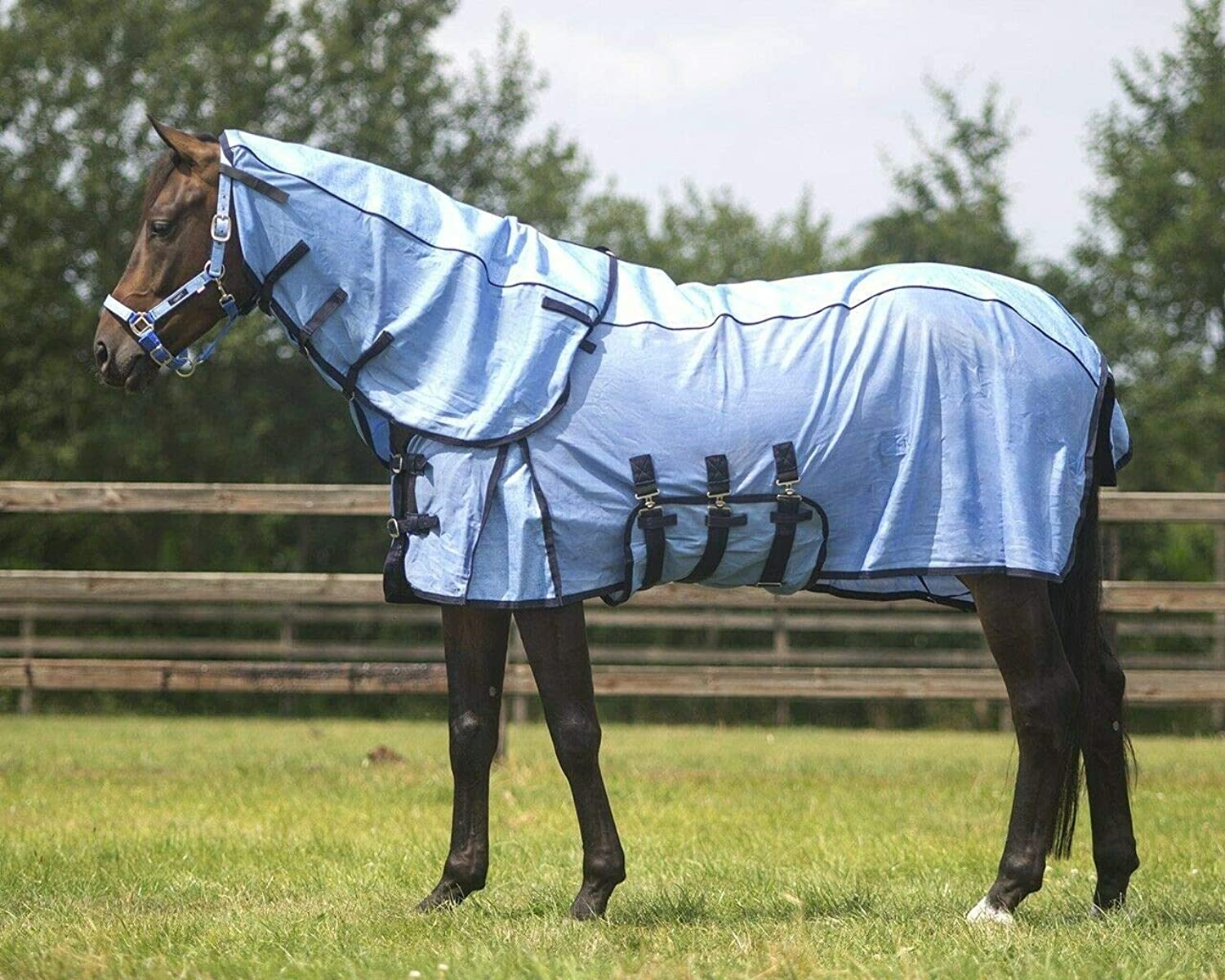 QHP Antifly rug combo with neck collection  Size 205