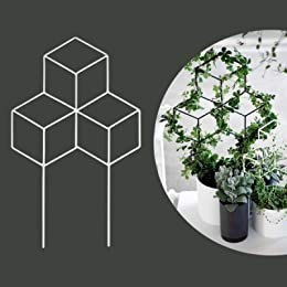 Best trellises for plants