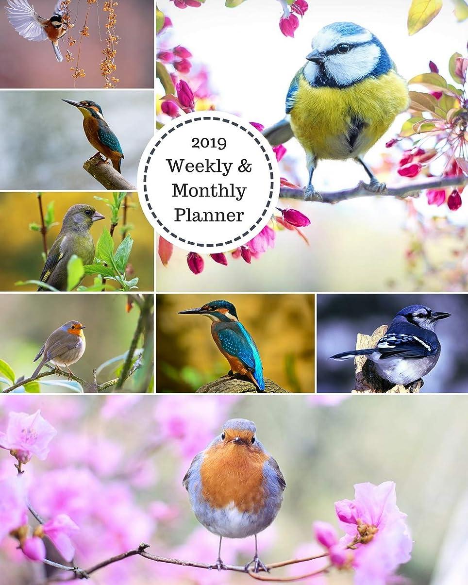 有効海里池2019 Weekly and Monthly Planner: Bird Collage Daily Organizer -To Do -Calendar in Review/Monthly Calendar with U.S. Holidays–Notes Volume 1