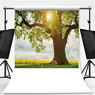 Single Huge Oak Tree in canola Field in Sunlight Photography Background,061120 for Photo Studio,Pictorial Cloth:6x10ft