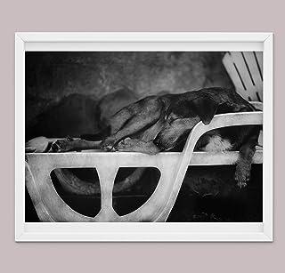 Regali Fotografici Per Cani Artistici Per Amanti Dei Cani, Stampe su Tela Poster Per Cani Varie Dimensioni, Decorazioni Pe...