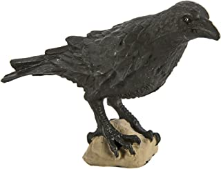 Safari Wings of the World: Raven