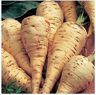 1000 Pcs Improved Hollow Crown Parsnip Pastinaca Sativa Vegetable Seeds #SSNH