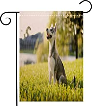 Creative Home Garden Flag Alaskan Malamute Klee Kai Puppy Sitting on Grass Looking Up Friendly Young Cute Animal Decorative Welcome House Flag for Patio Lawn Outdoor Home Decor, Linen 28 x 40 inch