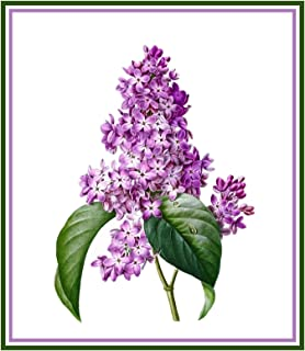 Botanical Redoute Lilac Flowers Counted Cross Stitch Pattern