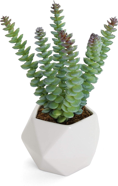Bornbridge Artificial Succulent - Fake Succulent in Planter - Faux Succulent with Ceramic Geometric Planter - Artificial Potted Plant (1 Pack, Crassula Marnierana)