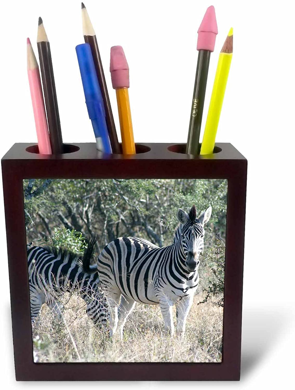 3dRosa PH 20113 _ 1 South African 2 Zebras Front Front Front View Tile Stifthalter, 12,7 cm B0052HYU6Q | Vorzüglich  2ca21f
