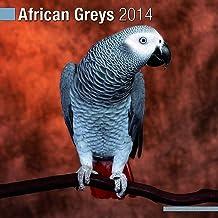 African Greys 2014