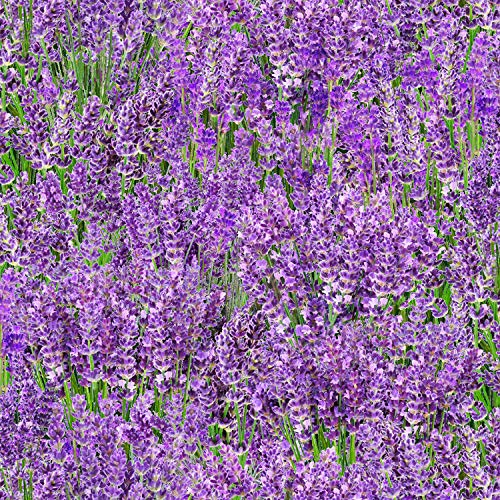 Lavender Field, Landscape Fabric, Elizabeths Studios, 572E-LAV, by The Yard