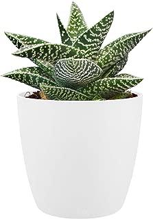 Elho Brussels Round Mini 9,5 - Flowerpot - White - Indoor - Ø 10.2 x H 8.7 cm