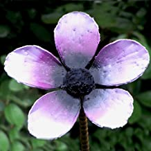 Violet metal handmade flower stake