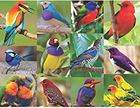 product image for Springbok's 500 Piece Jigsaw Puzzle Birds of Paradise