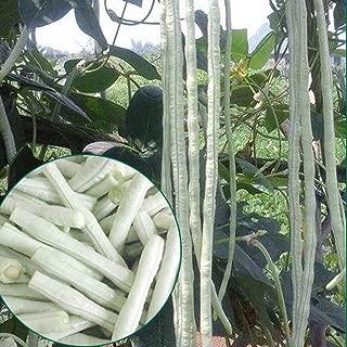 Long Bean Seeds 10g Snake/Yard-Long Asparagus Bean Red Noodle Pole Bean Garden Vegetable Organic Green Fresh Chinese Seeds for Planting Outside Door (Long Bean Seeds(White))