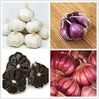 black garlic plant