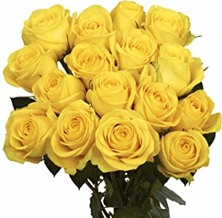 GlobalRose 100 Yellow Roses- Flower Delivery- Fresh Cut Long Stem
