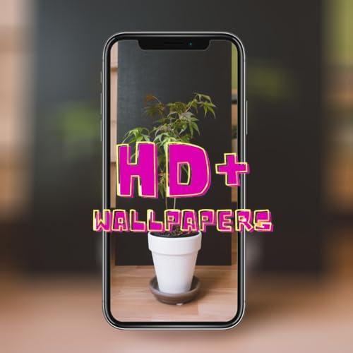 4K Bonsai Tree Wallpaper HD