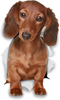 Winston & Bear 3D Dog Stickers - 2 Pack - Long Haired Brown Dachshund Stickers for Wall, Fridge, Toilet and More - Doxie 3D Decals - Retail Packaged Sausage Dog Stickers
