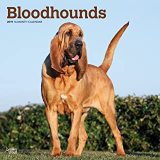 Bloodhounds 2019 12 x 12 Inch Monthly Square Wall Calendar, Animals Dog Breeds Hound (Multilingual Edition)