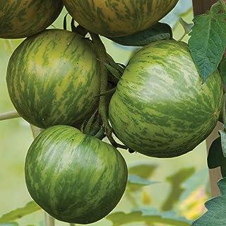 Tomato Green Zebra 15 Seeds Heirloom Striped Vegetable Garden Sweet Tangy Easy