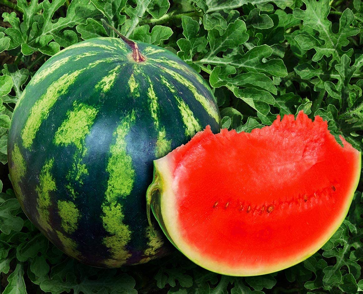 Super-cheap Seeds4planting - Bargain sale Seeds Watermelon Crimson Giant Sweet Heirloom V