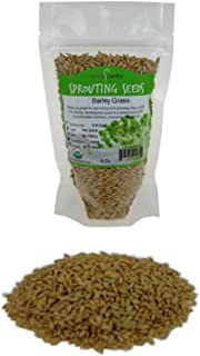 Handy Pantry Organic Barley Seeds - 8 Oz - Whole (Hull Intact) Barleygrass Seed - Ornamental Barley Grass, Juicing - Grain...