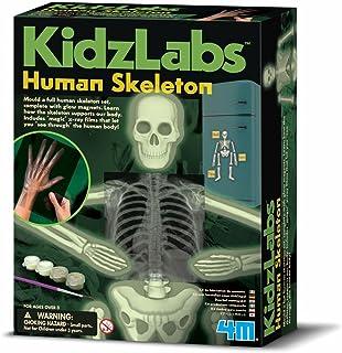 4M 403375 Kidz Labs Human Skeleton Play Set , Multi Color