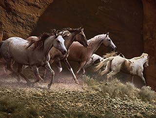 JP لندن pmur2196قش ّ ر ْ والصق ْ قابلة للإزالة ملصق حائط من الفينيل ملصق جداري ، Rolling Thunder Wild Stallion الحصان Sta...
