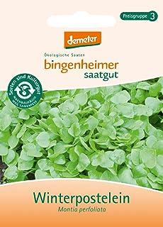 Bingenheimer Saatgut - Winterpostelein - Gemüse Saatgut / Samen