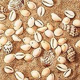 PandaHall 50 Stück Natürlichen Muschel Perlen Weiß für DIY Schmuck - 3